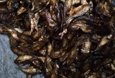 bonga fish & crayfish: