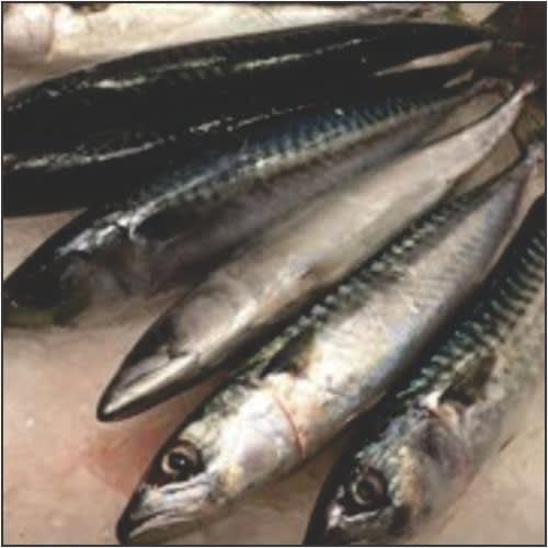 Fresh Titus Fish – 2kg