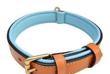 Soft Touch Collars Leather Two-tone Padded Dog Collar (tan Teal 24)