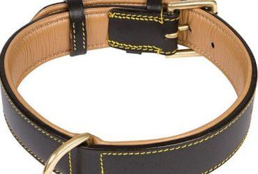 Leather Two-tone Padded Dog Collar (black 24)
