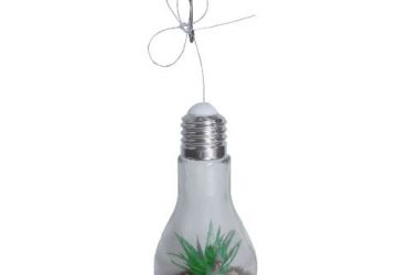 B25 Aloe Flower In A Glass Bulb