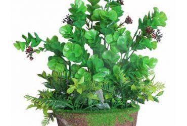 Hasnat Small Tree