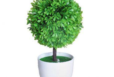 Selena Flower In Plastic Pot