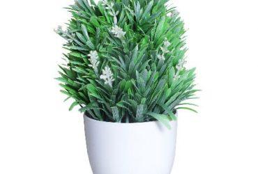 Venice Plant In White Pot