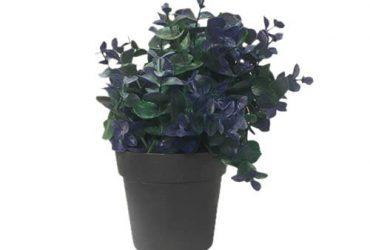 Potted Eucalyptus Plant -23 Cm
