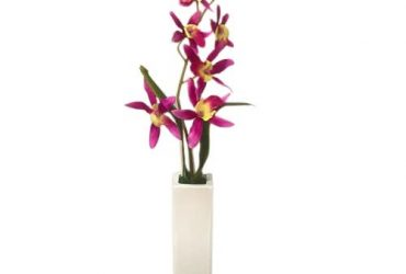Potted Orchid – Fuschia Pink