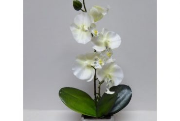 Potted Orchid In Square Pot – 40 Cm