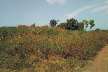A Genieu &Realiable Acr Of Land Is Available For Sale