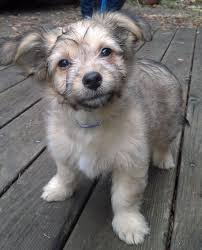 Baby Male Mixed Breed