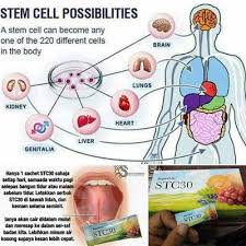 Stc30:Stem Cell Therapy